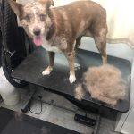 Dog After Groom