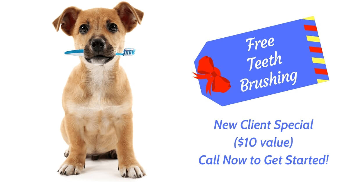 New Client Special Free Teeth Brushing